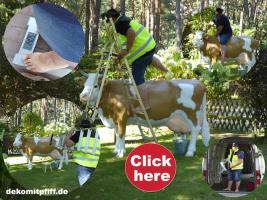 Foto 6 Verschenken kann So einfach Sein zb; ne Deko Kuh oder Deko Pferd ...