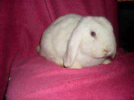 Foto 3 Verschiedene Kaninchen, Zwergwidder, Teddywidder und Rexwidderchen
