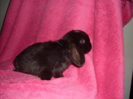 Foto 5 Verschiedene Kaninchen, Zwergwidder, Teddywidder und Rexwidderchen