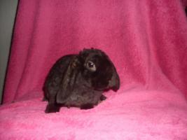 Foto 6 Verschiedene Kaninchen, Zwergwidder, Teddywidder und Rexwidderchen