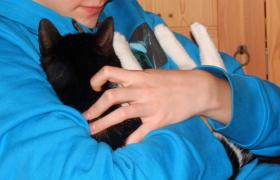 Foto 2 Verschmustes Katzenmädchen 12 Mon. su. liebev. zu Hause