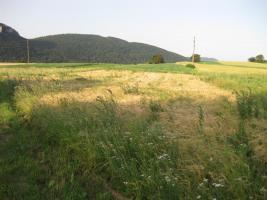Foto 5 Viel Natur u. Ruhe - keine Feinstaub- bzw. Lärmbelästigung