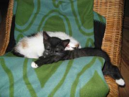 Foto 2 Vier Maikätzchen suchen ein liebes zu Hause