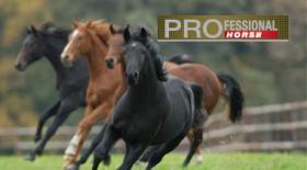 Horse L 01