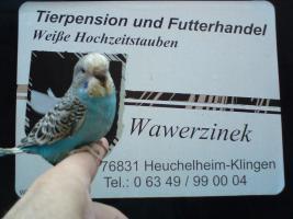 Vogel- und Kleintiermarkt am 26.06.2011 in Kandel
