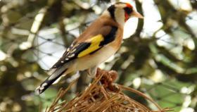Vogelfutter Online Shop Vogelfutter vom Vogelzüchter