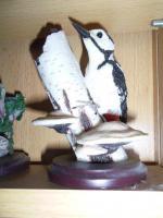 Foto 2 Vogelsammlung