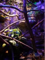 Foto 4 Vollautomatisiertes Terrarium zu verkaufen!!! GRO�!!!!!!!!!!!!!!!!!!!!!!!