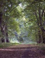 Wald-Initiative sucht händeringend Grundstücke im Großraum Neuss