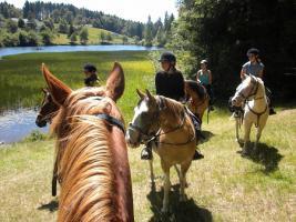Foto 4 Wanderreiten für Erwachsene, Entschleunigen in Todtmoos Au, Pferdetrekking, Reitferien