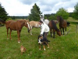 Foto 9 Wanderreiten für Erwachsene, Entschleunigen in Todtmoos Au, Pferdetrekking, Reitferien