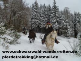Wanderreiten im Naturpark Südschwarzwald ab Todtmoos Au
