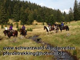 Wanderreiten, Freizeitreiten, Urlaub im Sattel, Reitferien in Todtmoos Au, 40 Km von Basel/Schweiz