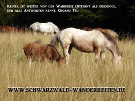 Foto 2 Wanderreiten, Pferdetrekking ab Todtmoos Au auch als Geschenkidee
