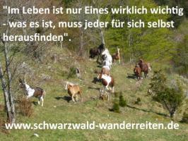 Foto 3 Wanderreiten, Pferdetrekking, Freizeitreiten, Reitferien im Schwarzwald Todtmoos Au