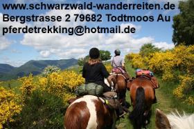 Wanderreiten, Reitferien im Schwarzwald Todtmoos Au