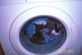 Foto 8 Waschvollautomat Bosch MAXX 6 WAE 2834 A