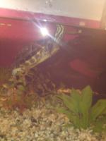 Foto 3 Wasserschildkröte