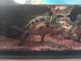 Foto 3 Wasserschildkröten
