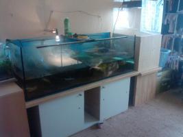 Foto 6 Wasserschildkröten