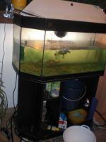 Wasserschildkröten mit oder ohne Aquarium