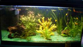 Water Home Aquarium + Zubeh�r