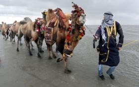 Wattwandern auf dem Kamel