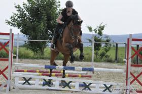 Wegen Aufgabe  Pferde  Fohlen bis 5 J�hrig