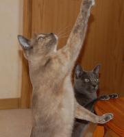 Foto 2 Wegen Umzug 2 liebe Katzenmädchen abzugeben