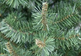 Foto 2 Weihnachtsbaum Kunststoffbaum Christbaum Weihnachten Tanne Elisa