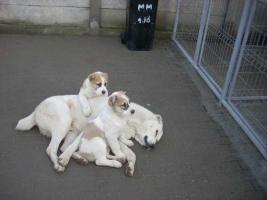 Welpen Hunde