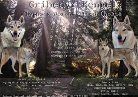 Welpen Tschechoslowakischer Wolfshund Kennel Gribedyr