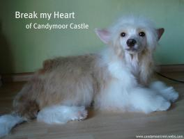 Break my Heart of Candymoor Castle