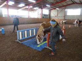 Foto 5 Welsh A - Gespann, Stuten, knapp 4jährig, vom Profi eingefahren