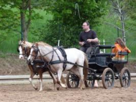 Foto 2 Welsh A -Stute aus 2009, vom Profi eingefahren und geritten