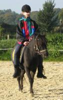 Foto 3 Welsh-Shetty Mix Ponystute 6 J., angeritten