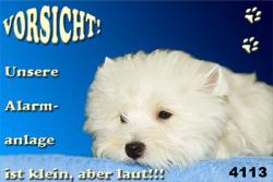 Foto 4 West Highland White Terrier  Westie Fanartikel