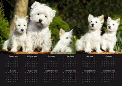 Foto 8 West Highland White Terrier  Westie Fanartikel