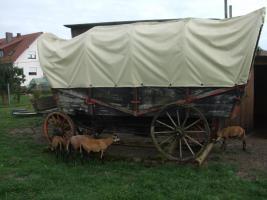 Foto 2 Western - Planwagen - Kutsche