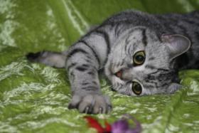 Whiskas-Katzen Dream-Team Mutter und Sohn