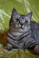 Foto 2 Whiskas-Katzen Dream-Team Mutter und Sohn