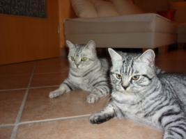 Foto 8 Whiskas-Katzen Dream-Team Mutter und Sohn