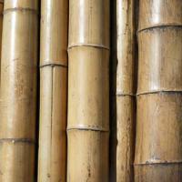 Wie bieten Bambusstangen