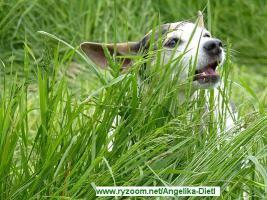 Wieviel gibst DU/IHR für Hunde-bzw.Katzenfutter im Monat aus?