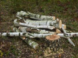 Wild, Kaminholz, Feuerholz, Brennholz und Holzpellets  aus Privatwald