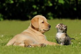 Willkommen in der Kleintierpension Hund und Katz in Graz!