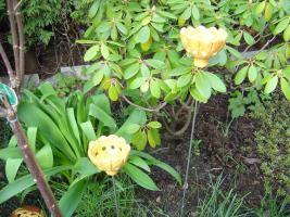 Windlicht Blume Bl�te orange Garten Terrasse Balkon Dekoration Geschenk