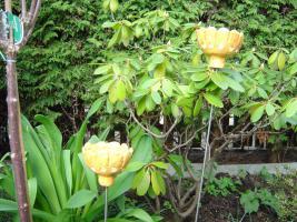 Foto 5 Windlicht Blume Bl�te orange Garten Terrasse Balkon Dekoration Geschenk