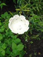 Foto 3 Windlicht Blume Bl�te perlmutt Garten Terrasse Balkon Dekoration Geschenk