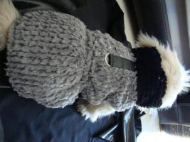 Foto 6 Winterbekleidung für den modernen Hunde von heute